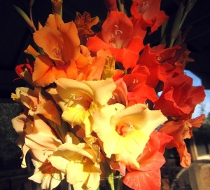 A bouquet of the hardy gladiolus. Photo: Joseph Tychonievich