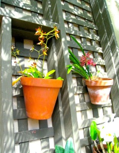 Potted orchids stay cool in the dappled shade of Balboa Park's Botanical Building in San Diego, California. Photo: Benita Green Lee