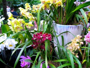 A grouping of orchids vie for attention at Balboa Park's Botanical Building in San Diego, California.  Photo: Benita Green Lee