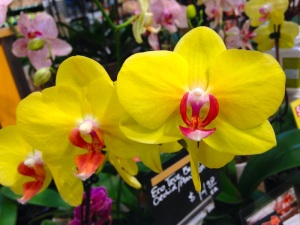 Yellow beauties seek attention in the Whole Foods flower department.  Photo: Benita Green Lee