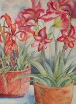 Pata de Gallo and Amaryllis by Dottie Oatman