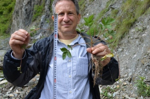 Professor Aaron Liston in Sichuan, China, holding a native wild strawberry. Photo courtesy of Aaron Liston.