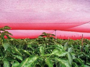 The red netting manufactured by Chromatinet has been shown to increase productivity in several plant species.